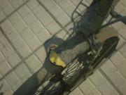 restauration de vélo 372061144240993
