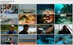 Mureny Obce imperium / Moray Eels Alien Empire (2010) PL.720p.HDTV.x264 / Lektor PL