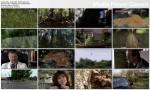 Czarnobyl. Triumf natury / Tchernobyl, une histoire naturelle (2009) PL.TVRip.XviD / Lektor PL