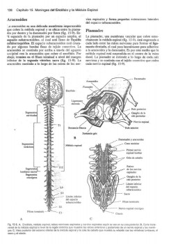 LIBRO SNELL NEUROANATOMIA DESCARGAR PDF DE DE